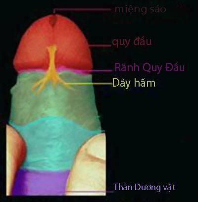 dut-day-ham-bao-quy-dau